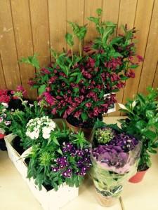 BlumenschießenAuswahl